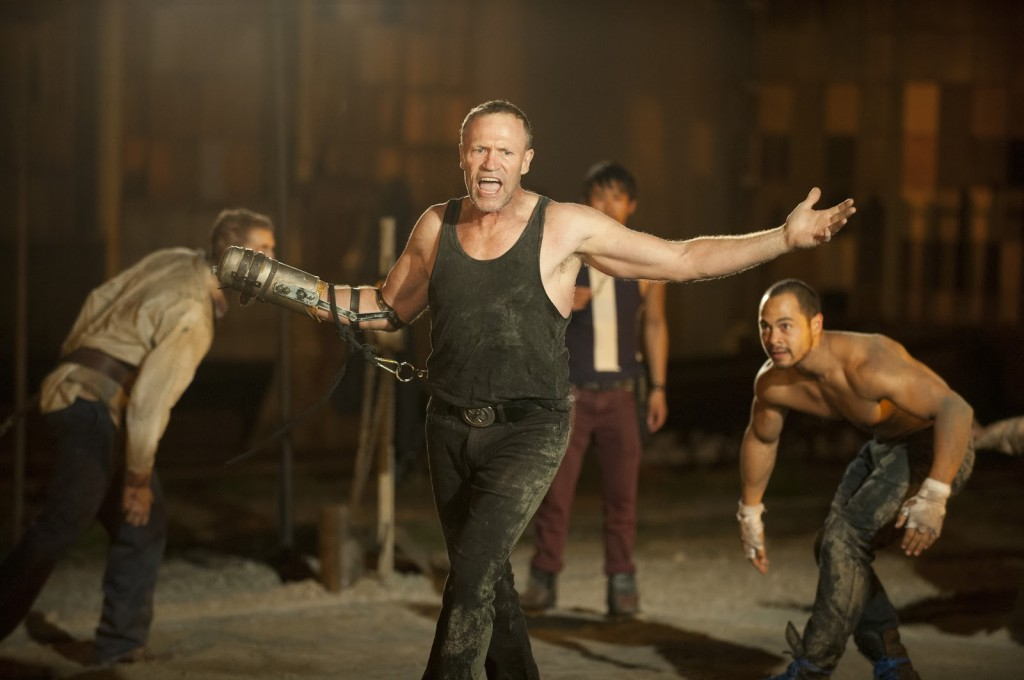 Merle fight